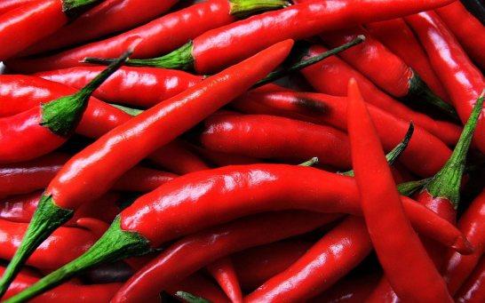 Świeża papryczka chili